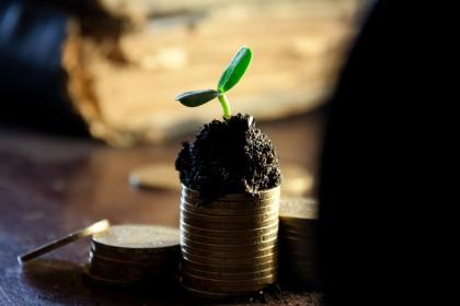 Neuer Beitrag der Sozialkassen Bau für Solo-Selbständige : Geld, Pflanze (money)