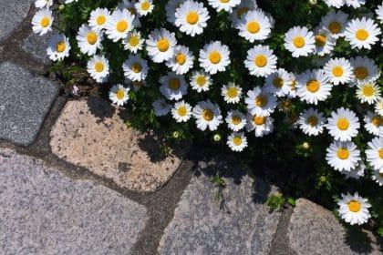 Gartenbau, Landschaftsbau, Soka-Bau Beitragspflicht